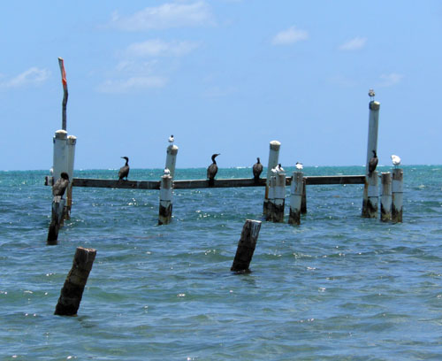 Caye Caulker, Belize - old pier
