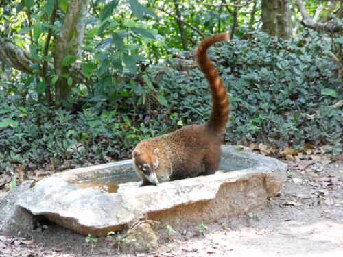 Tikal: Pizote
