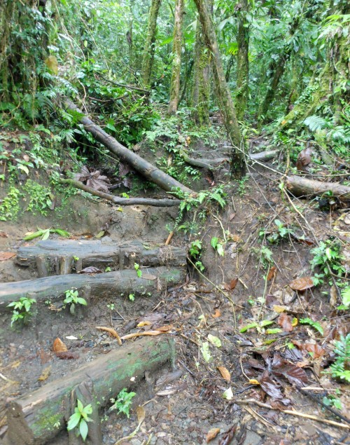 Cerro Chato: climb down to the lake