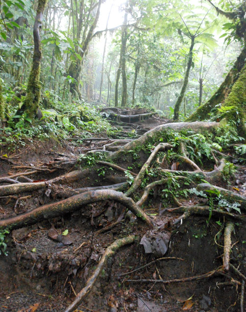 Cerro Chato: forest path