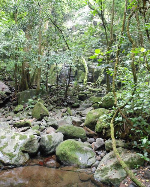 Rincon de la Vieja Nationa Park: path