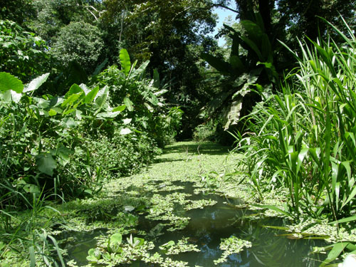 Cahuita sloth sanctuary: Lagoon ride
