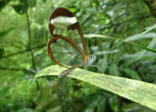 Costa Rica: butterfly observatory