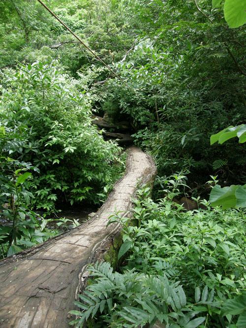 Costa Rica: Rincon de la Vieja, fallen tree bridge