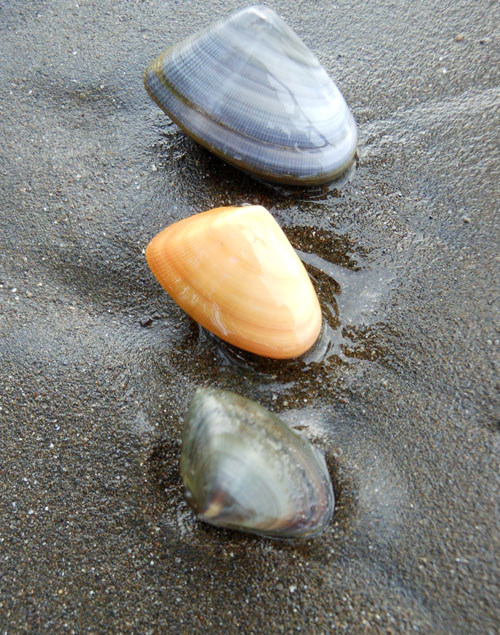Costa Rica: mussles at Playa Panama