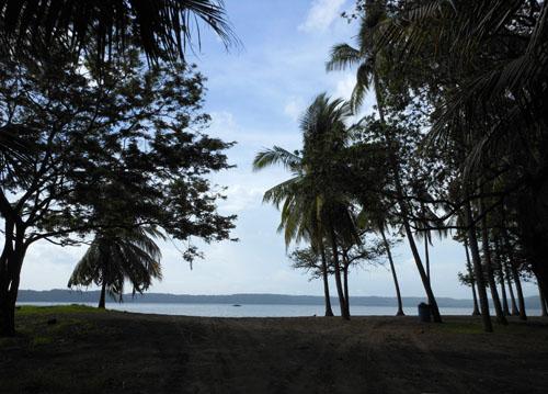 Costa Rica: Playa Panama with palm trees