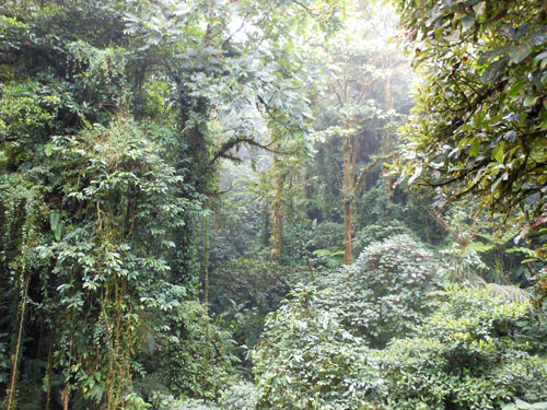 Costa Rica: Santa Elena Could Forest - at tree top height
