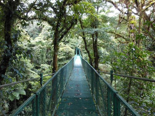 Costa Rica: suspension bridge through trees at Santa Elena Could Forest