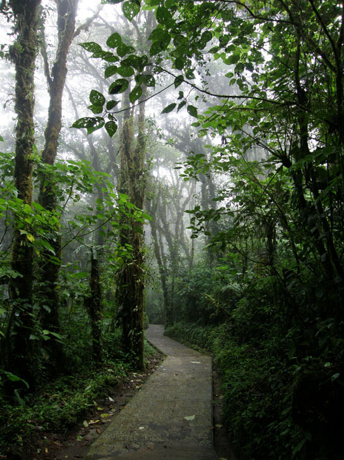 Costa Rica: walking through Santa Elena Could Forest