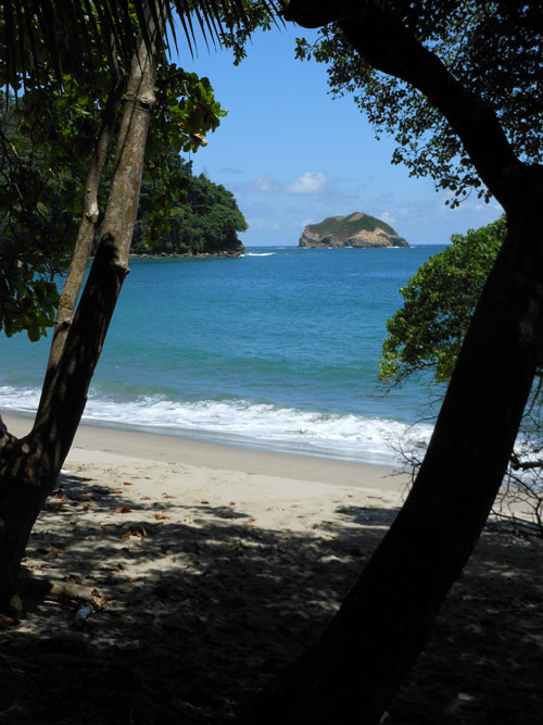 Manuel Antonio National Park: beach through trees