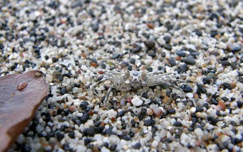 Manuel Antonio National Park: spot the crab