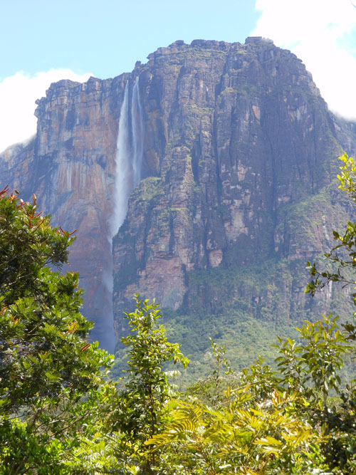 Venezuela - Canaima National Park: Salto Angel through trees