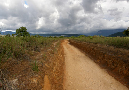 Venezuela - Canaima National Park: walk across savannah