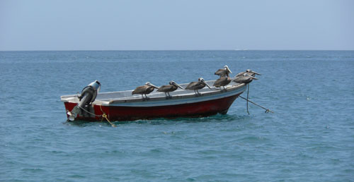 Colombia - Bahia Concha: pelicans relaxing on a boat