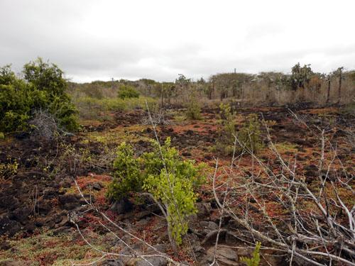 Santa Cruz Galapagos route to Las Grietas