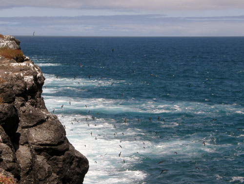 South Plaza, Galapagos - view of the birds flying from cliffs