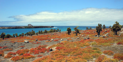 South Plaza, Galapagos - view of the landscape and the channel