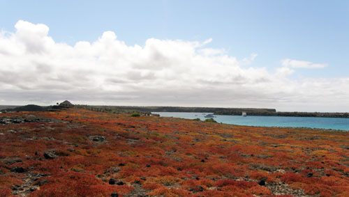 South Plaza, Galapagos - view of the landscape