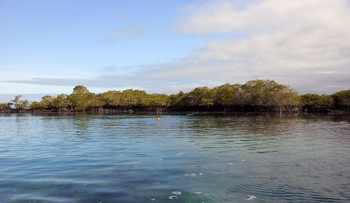 Galapagos, Isabela Island - calm waters of Concha y Perla