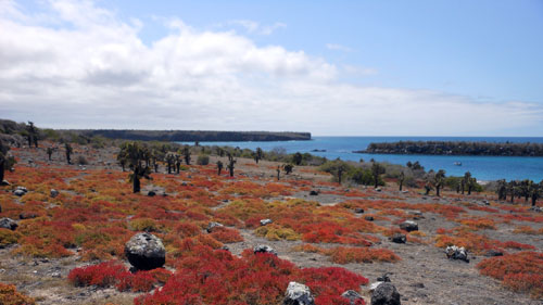 Galapagos, South Plaza Island - landscape view