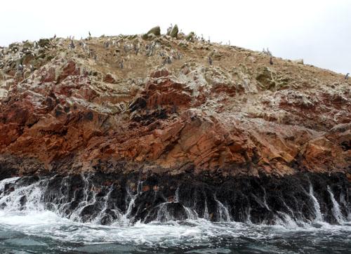 Peru, Islas Ballestas - penguins