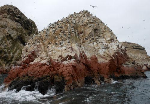 Peru, Islas Ballestas - Peruvian boobies resting on rocks