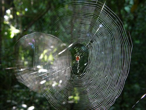 Bolivia, Serere Reserve - spiderwebs