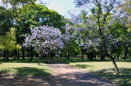 Buenos Aires, Palermo - botanical garden