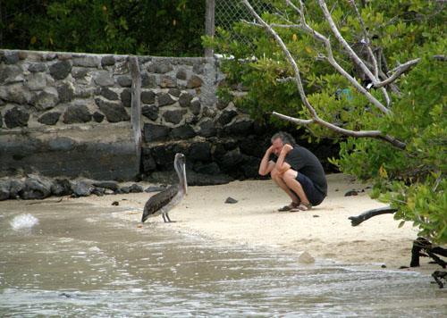 Man versus pelican