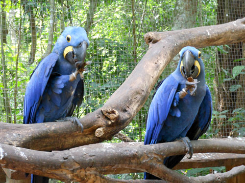 Parque das Aves (Bird Park, Brasil) - macaws