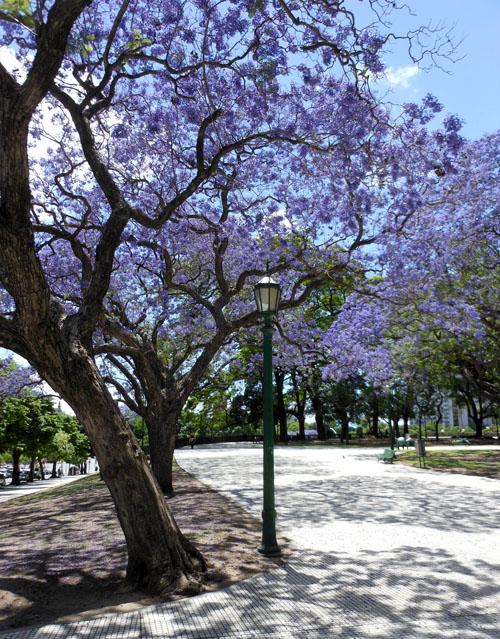 Argentina, Buenos Aires, Center - San Martin park