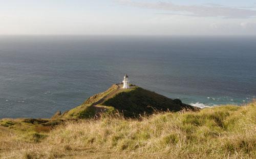 New Zealand, North Island - Cape Reinga, on the way to lighthouse