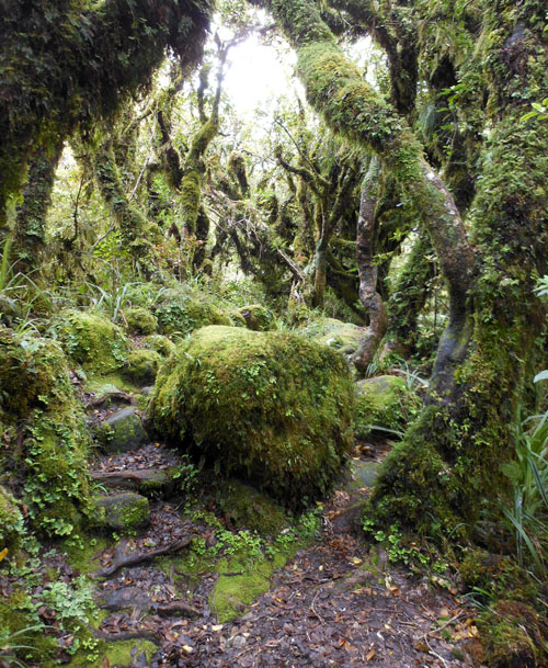 New Zealand, North Island - Mount Taranaki, Ngatoro Loop Track