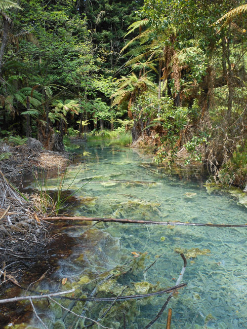 New Zealand, North Island - Rotorua, thermal waters in the redwoods