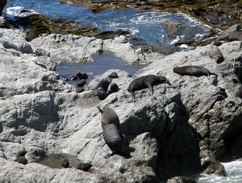 Okiwi Bay - seal colony with day care facilities